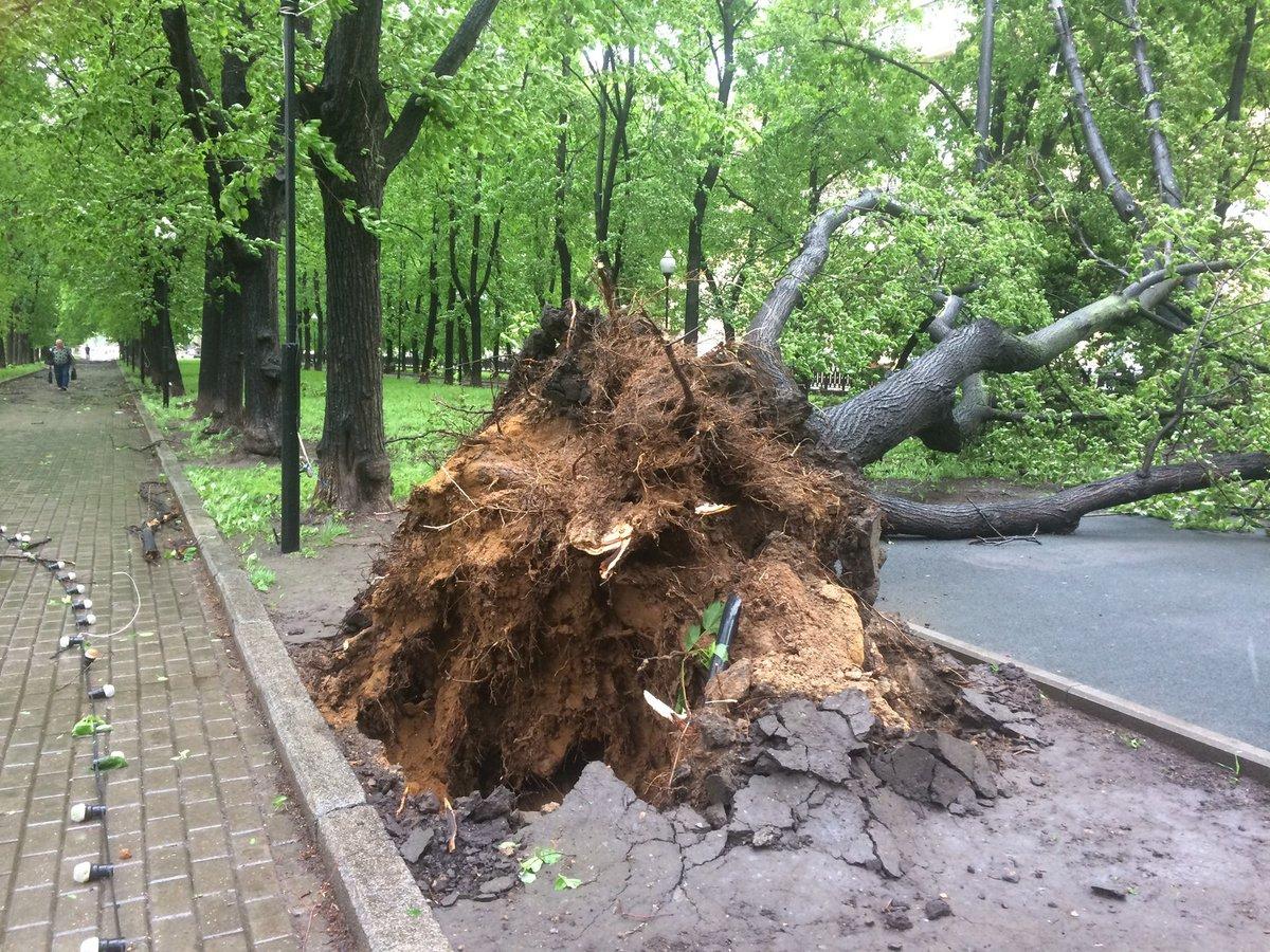 Число жертв урагана в Москве возросло до 14 человек