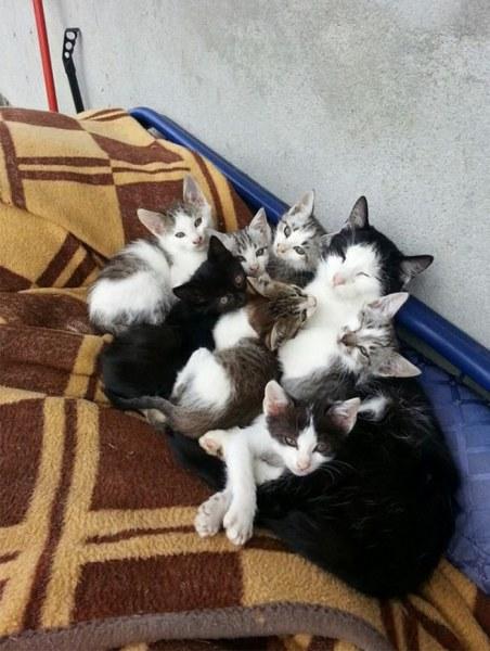 Счастливые кошки-мамы