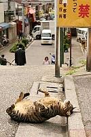 Кошки и Котята 77