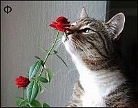 Кошки и Котята 17