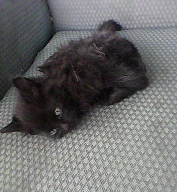 Лежал грязный на асфальте: женщина выходила котенка, который не мог ходить