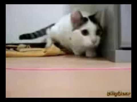 Подборка приколов про животных. Коты, собаки и др. Угар №6