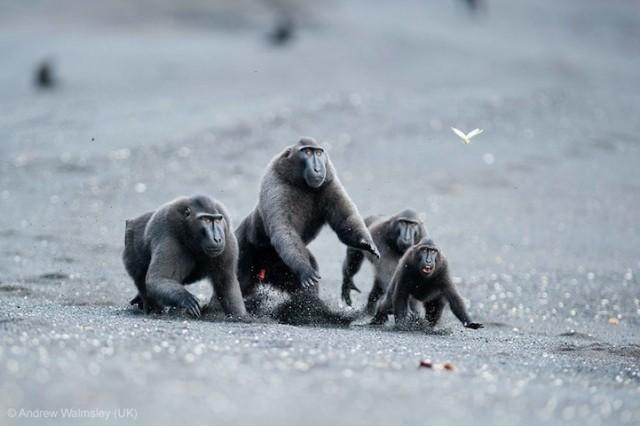 Забавные фото победителей конкурса Wildlife Photographer of the Year (18)