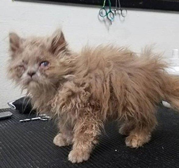 Котёнок, найденный в кустарн…