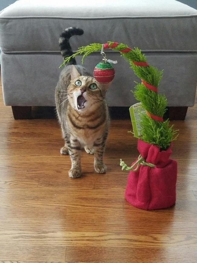 20 бесподобных котов, вступивших в неравный бой с новогодними украшениями