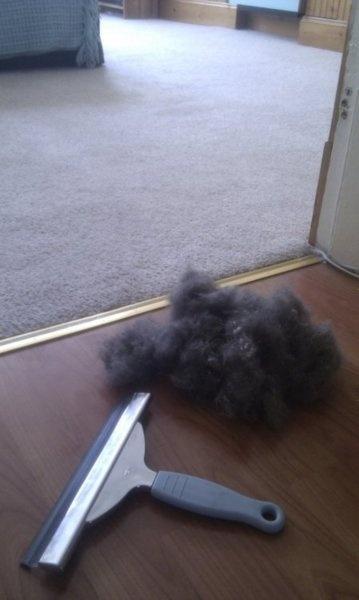 Кто знал, что ...  Окно швабра удаляет шерсть домашних животных с ковров ...