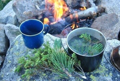 Чай из сосновой хвои жизнь продлевает.