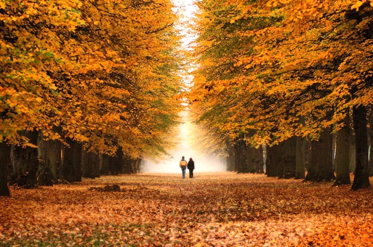 autumn-walk