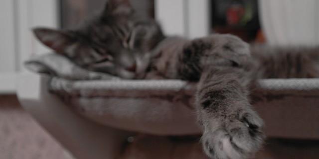 Как сделать лежанку для кота над батареей