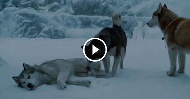 Собаки смогли выжить и дождаться прилета людей