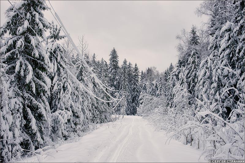 Фото Гжель Провода, покрытые снегом