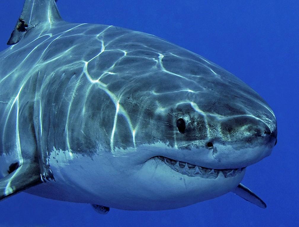 Австралиец отбился от акулы с помощью швабры