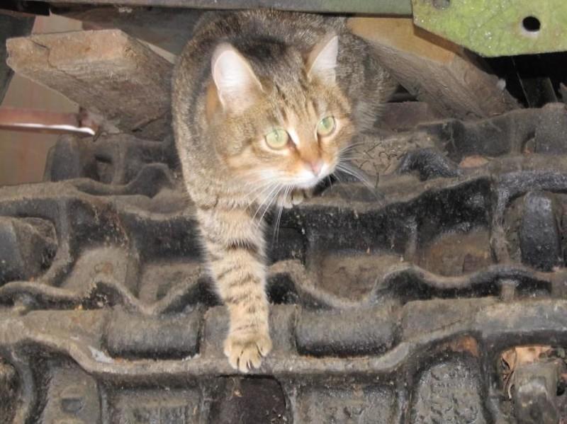 На завтрак. бронетехника, животные, коты