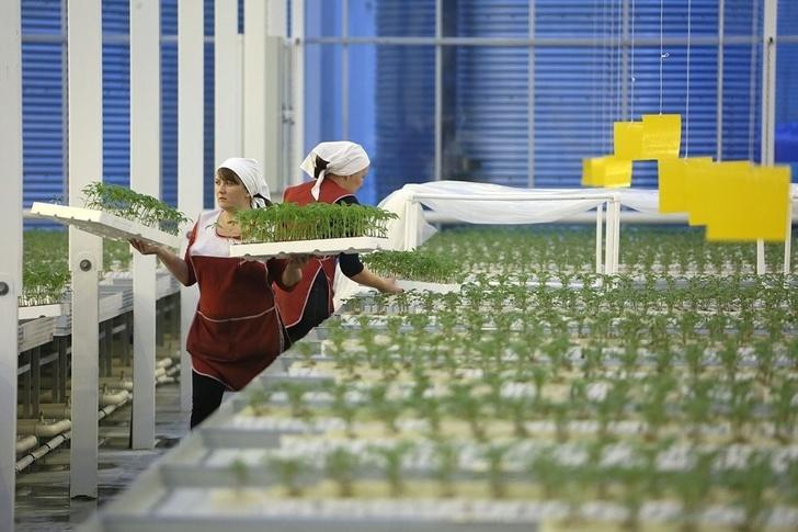 На Урале открыли энергосберегающие теплицы