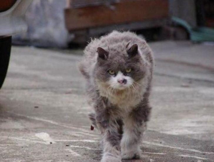 Бродячий кот, пройдя через испытания, нашел своего хозяина