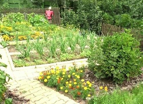 Безвредные недорогие средства в помощь садоводам и огородникам.