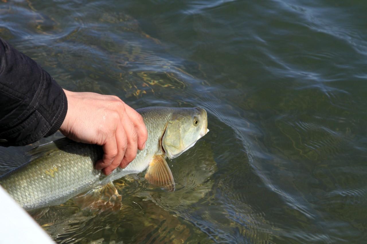 Дай бог всем такой рыбалки!