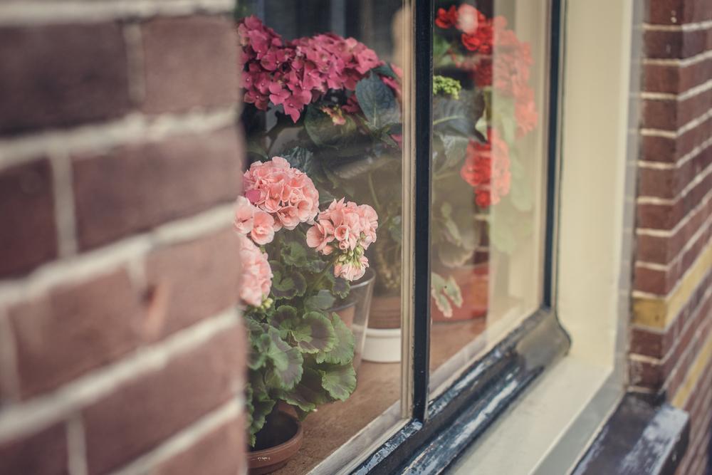 10 советов по обустройству зимнего сада в квартире