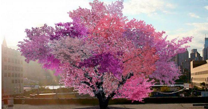 Это одно из самых красивых деревьев на земле. Но знаете ли Вы, что растет на нем?