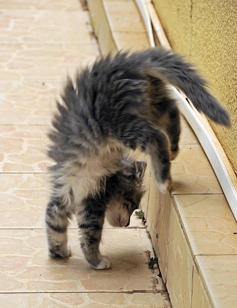 Пластилиновые коты