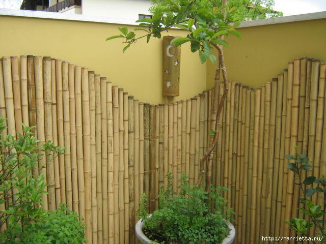 Как вырастить настоящий бамбук в домашних условиях - Альтаир и К