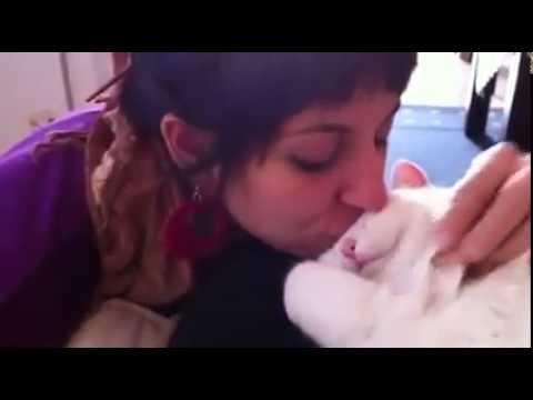 Девушка поцеловала своего кота! То, как он на это отреагировал — бесценно!