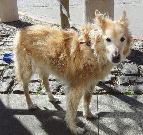 Он думал, что спас беспородного щенка с улицы. Но когда она подросла...