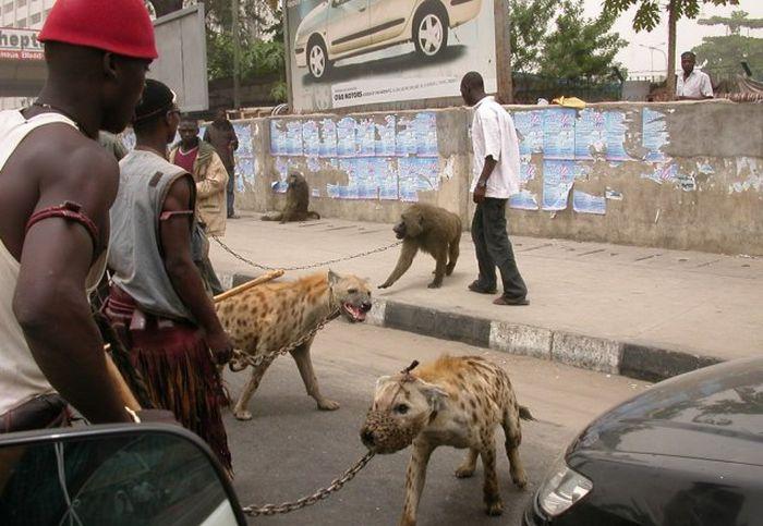 Такое вы сможете увидеть только в Африке (29 фото)