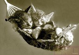 Кошки и Котята 18