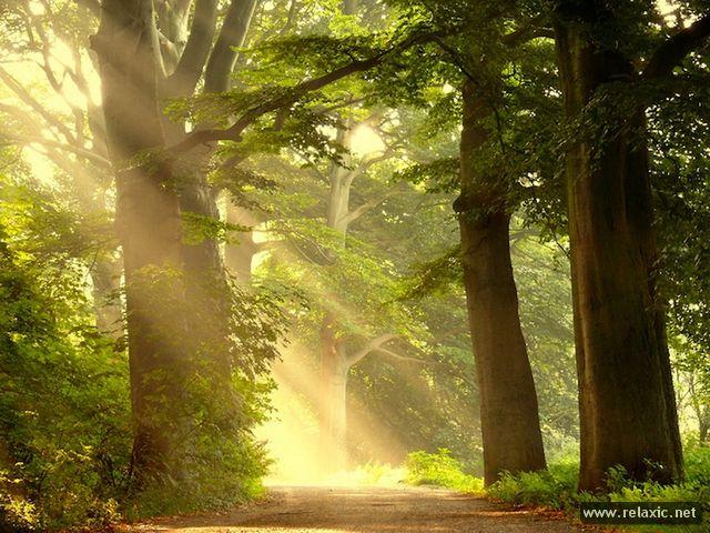 Sun_rays_004