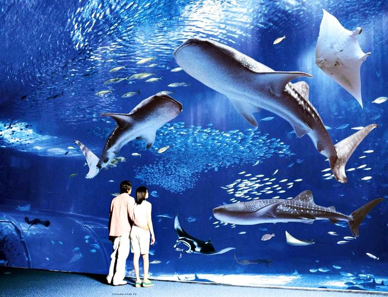 Океанариум Тюрауми Япония. Океаны в миниатюре. Самые известные и крутые океанариумы мира. Фото с сайта NewPix.ru