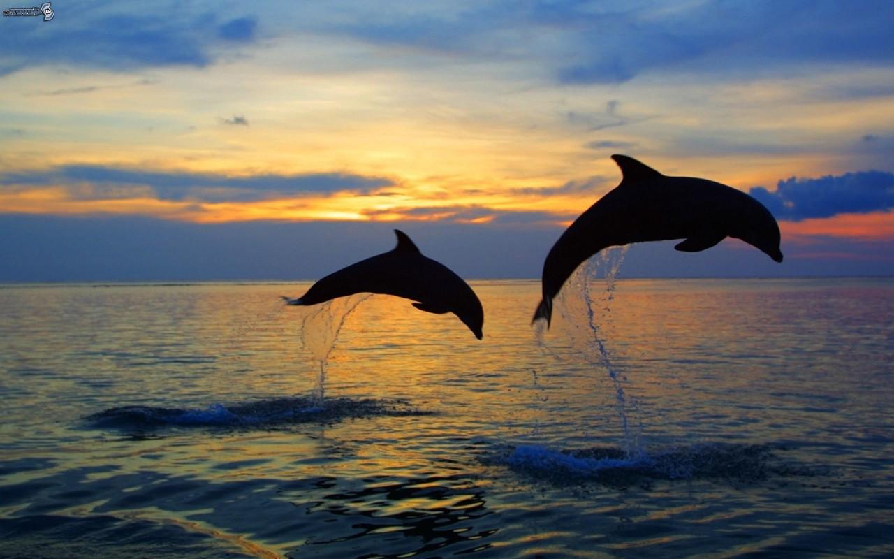 Голодные дельфины довели итальянских рыбаков до забастовки