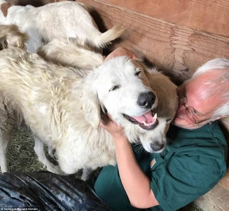 Пастушья собака спасла свое стадо в жутком лесном пожаре, где были бессильны люди