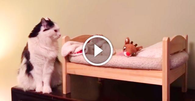 Кошка готовится ко сну в собственной кроватке