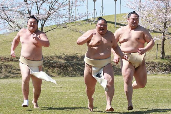 Как дети! Сумоисты наслаждаются цветением сакуры