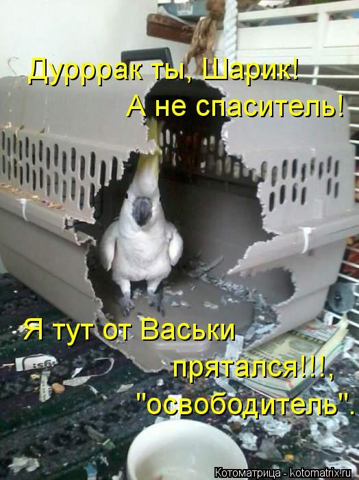 """Котоматрица: Дурррак ты, Шарик! А не спаситель! Я тут от Васьки  прятался!!!, """"освободитель""""..."""