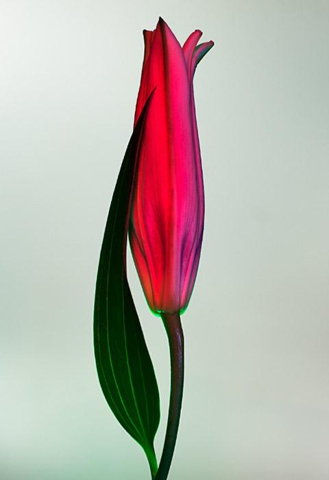 электрический цветок Electric Blossom Торкил Гуднасон