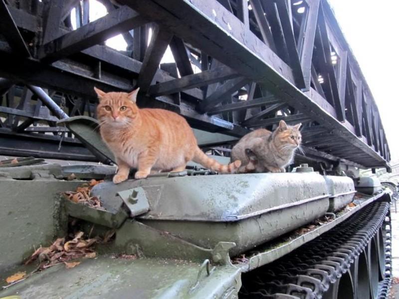 Мостоукладчик — дом родной. бронетехника, животные, коты
