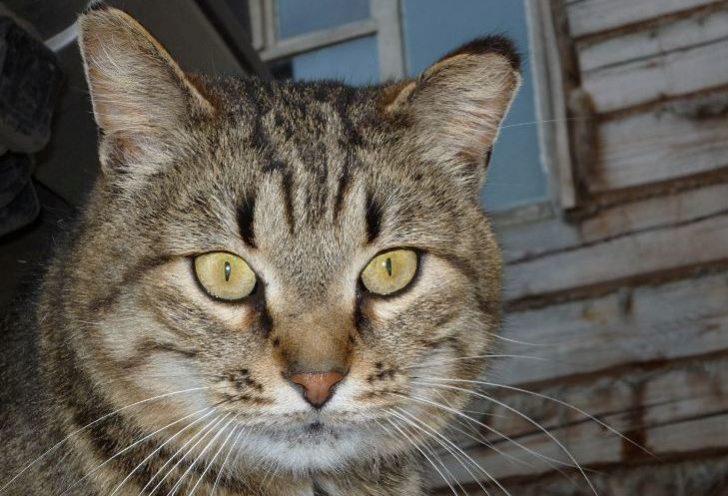 Жизненная история про мерзавца, который оказался вполне порядочным котом
