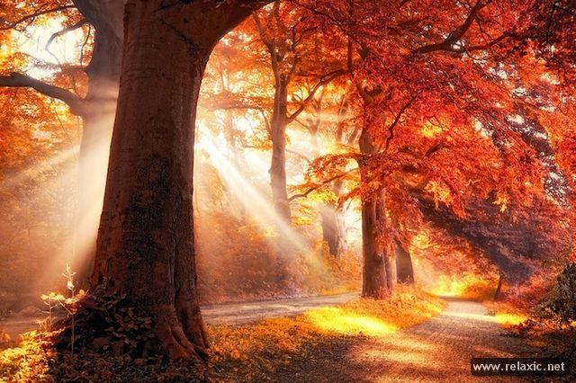 Sun_rays_015