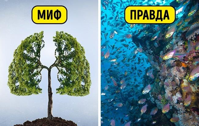 6 главных экологических мифов нашего времени