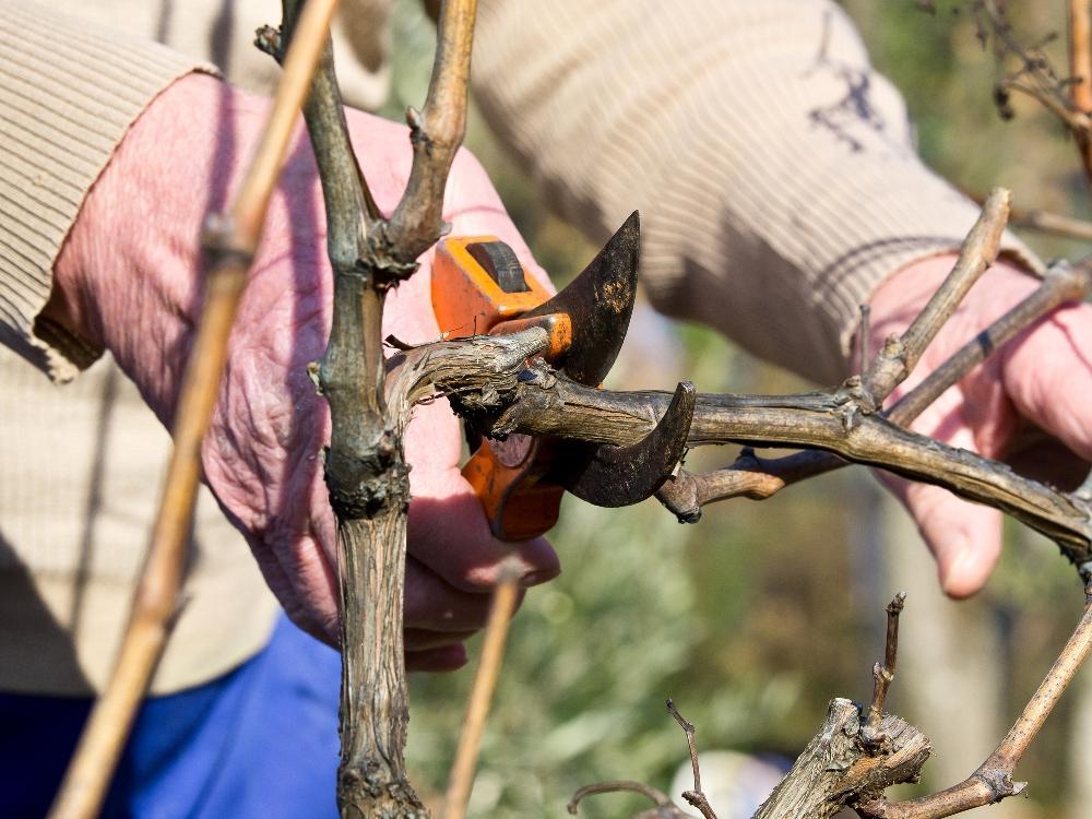 12 ошибок, которые вы допускаете при обрезке растений