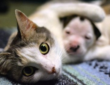 Чужих детей не бывает! Кошка украла щенков. И украла для того, чтобы заменить им маму