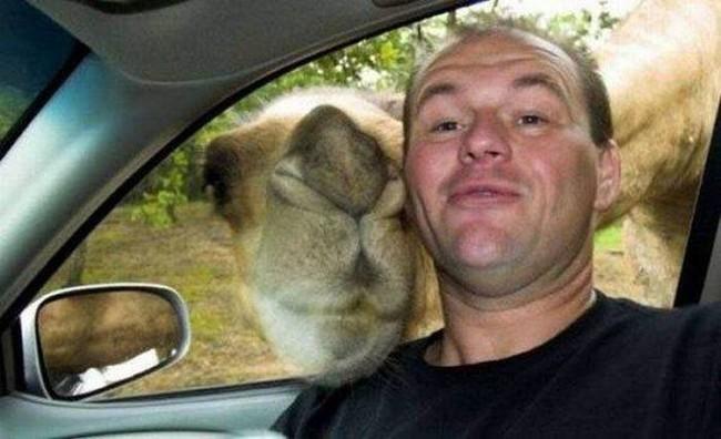 Автоселфи с животными