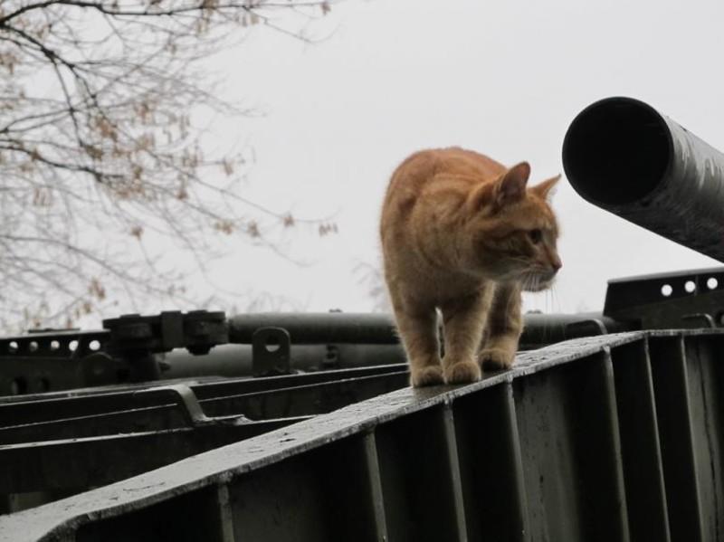 Бронекоты Центрального музея Вооруженных сил бронетехника, животные, коты