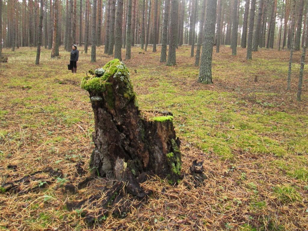 Лесной трон.