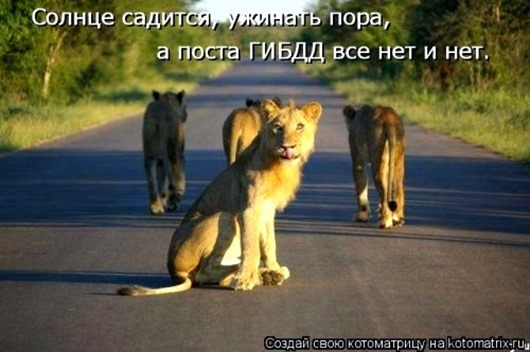 1483107342_kotomatricy-6