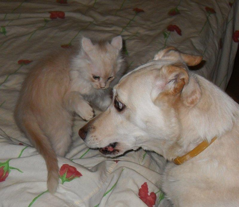 Хамура Кусаки кошки, питомцы, собаки