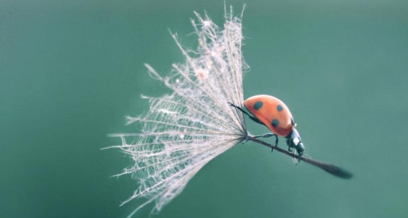 20 чудных фото о том, что мы не замечаем, как удивительна жизнь и прекрасен мир