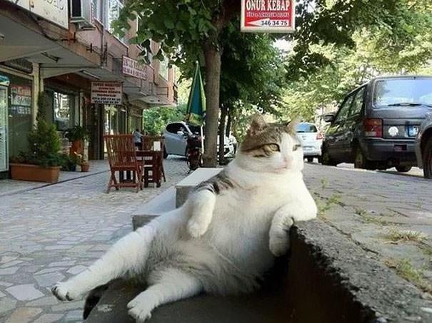 Та самая фотография Томбили, прославившая его на весь мир животные, кот, памятник, стамбул